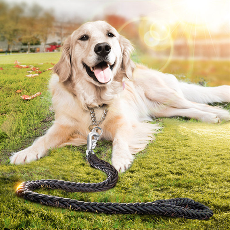 How to Train Golden Retriever Dogs How to Train Golden Retri